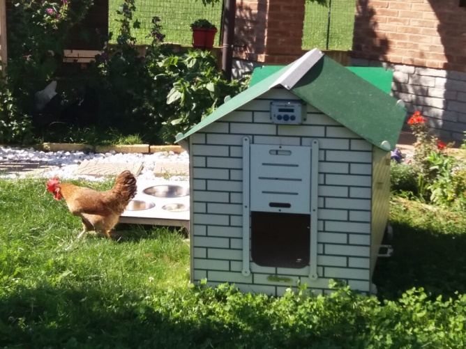 Valorizza il tuo giardino con un bel pollaio domestico